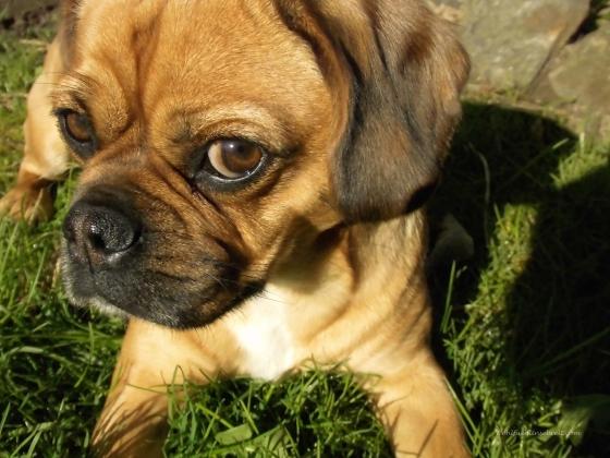 Hund, Leben, positiv, Ansichtssache,