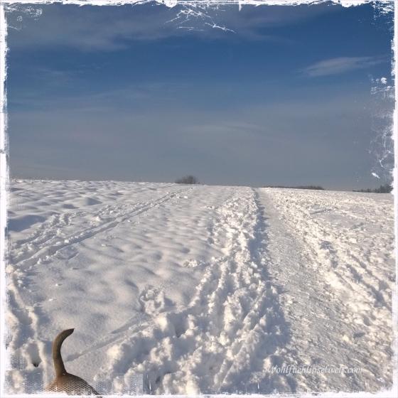 Wohlfuehlinselwelt - Winterparadies