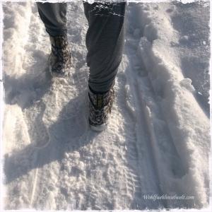 ein Winterspaziergang in der Sonne... *schnurr*